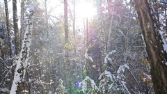 Winter forest on a sunny day Stock Footage