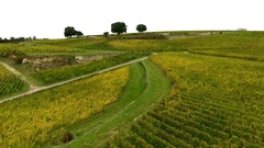 Bordeaux vineyards, Saint-Emilion, in Aquitaine area of the Gironde department,  Stock Footage