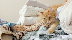 Cute ginger cat sleeps on a pile of knitted clothes. Warm knitted sweaters and Stock Footage
