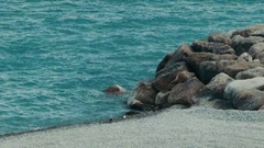 A small bird walking around the Seashore Stock Footage