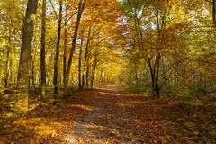 Natural background of autumn forest on a sunny day Stock Photos