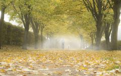 Autumn alley with fallen leaves and mist. Fog in autumn park. Stock Photos