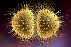 Bacteria gonococcus or meningococcus Stock Illustration