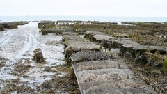 Oyster farms with growing oysters in lowtide, Cancale, France Stock Footage