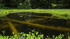 Lost magic lake with underwater trees time lapse. Dolly shot of mysterious loch Stock Footage