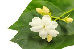Close uo white jasmine Stock Photos
