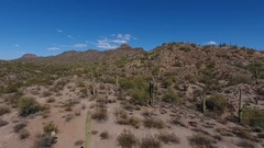 Aerial view of a lush desert environment Stock Footage
