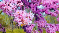 Pink plant Stock Footage