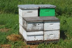 Pollination beehive, white and green wooden box beekeeping at the farm Stock Photos