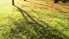 Falling leaves in the wind in autumn park. No camera movement.  Real time. Stock Footage
