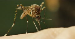 Mosquito borne diseases include malaria, dengue, zica Stock Footage