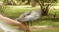 Pigeons eating on the hands. 4k or 4k+ Resolution