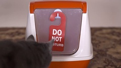 Young gray cat using covered litter box with door hanger sign Do Not Disturb Stock Footage