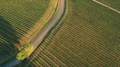 Aerial - Scenic road between the vineyards at sunset Stock Footage