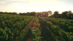 Aerial - Flying above the rows in vineyard at sunset Stock Footage