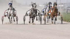 SLOW MOTION: Harness horse - Three horses on a track (front view) Stock Footage