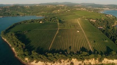 Aerial - Panoramic view of a vineyard growing on the cape Stock Footage