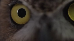 Great horned owl extreme close up of eye Stock Footage