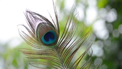 Peacock Feather Close Up Stock Footage
