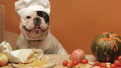 French bulldogs as a chef cooking vegetables Stock Footage