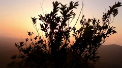Setting Sun Through Plant In The Mountain Stock Footage