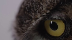 Great horned owl extreme close up Stock Footage