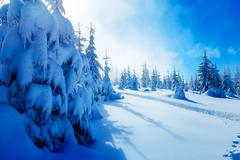 Beautiful mountain snowy landscape and snow covered trees. Beautiful sunny day Stock Photos