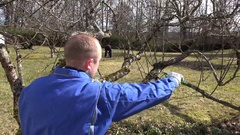Skilled man pruning dwarf fruit tree twigs branches on blue sky. Hand shot Stock Footage