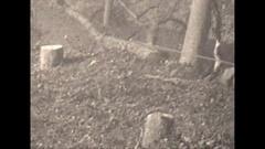 Vintage 16mm film, 1930, tractor logging b-roll #2 Stock Footage