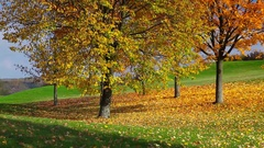City park with autumn colors Stock Footage