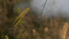 Grass and Lake Stock Footage