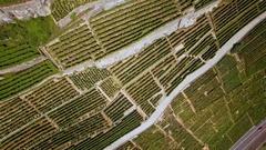 Vineyards terrace aerial shot Stock Footage