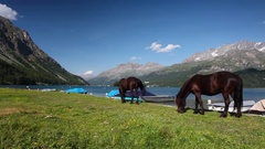 On the pasture near the Lake Sils Stock Footage