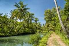 Countryside road with coconut palms of Indonesia Stock Photos