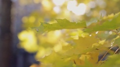 Autumn beauty, colourful leaves close-up Stock Footage