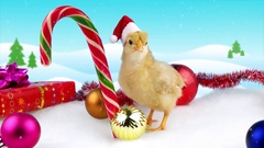 Cute gold young rooster with Christmas decoration and snowfall Stock Footage