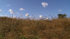 Prairie grass zoom out Stock Footage