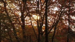 Slow motion trackng shot through autumn trees. Stock Footage