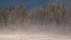 Autumn Dust Storm Windy Fall Colors Stock Footage