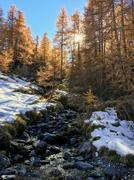 Mountain landscape in autumn: small torrent in a larch forest in fall season Stock Photos