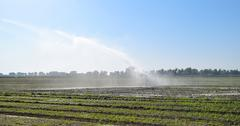 Irrigation system in the field of melons. Watering the fields. Sprinkler Kuvituskuvat