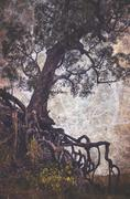 Spooky tree with tangled roots Stock Illustration