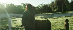 Woman feeding a llama on a sunny day Stock Footage