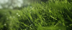 Dew drops on green grass in the field on a sunny day Stock Footage