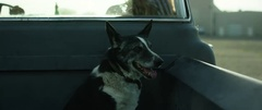Dog sitting on backside of truck Stock Footage