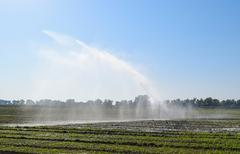 Irrigation system in the field of melons. Watering the fields. Sprinkler Stock Photos