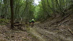Group of riders cyclists ride along a forest trail Stock Footage