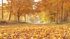 Path through a Beech tree forest during a beautiful fall day Stock Footage