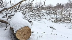Cut down tree branch in snowing winter forest swamp dry grass nature Stock Footage