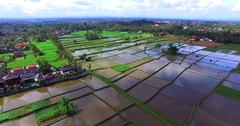 Rice fields plantations near the town of Ubud. Aerial top view. Bali Indonesia Stock Footage